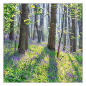 BBC Countryfile card – Bluebell Woodlands
