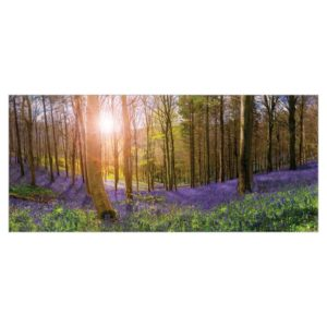 Bluebell Woods – card